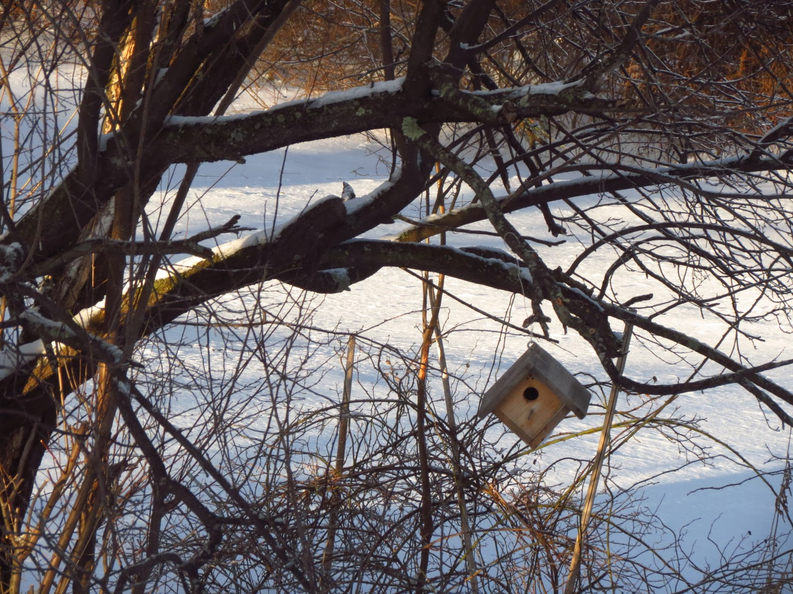 my favorite birdhouse