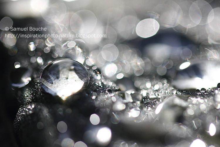 photo macro de gouttes d'eau qui brillent