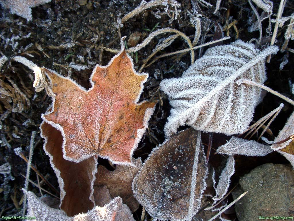 eat live grow paleo preparing your garden for the winter