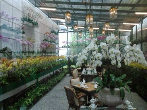 Orchid Tea Room - The Majestic Hotel - KL Malaysia