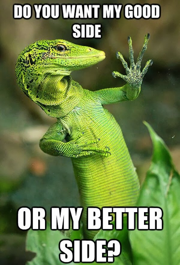 30 Funny animal captions - part 19 (30 pics), funny lizard picture with funny captions, do you want my good side or better side