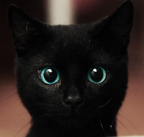 Ciao Io Sono Un Gatto Nero I Love Cats