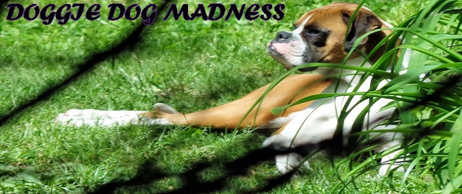 Doggie Dog Madness