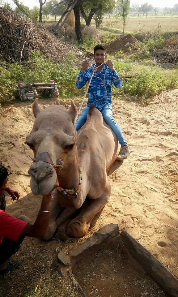 Rahul Pandat Ji - Camel Riding