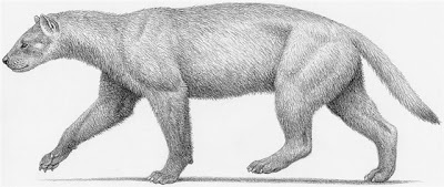 mustelidae extinct Ekorus