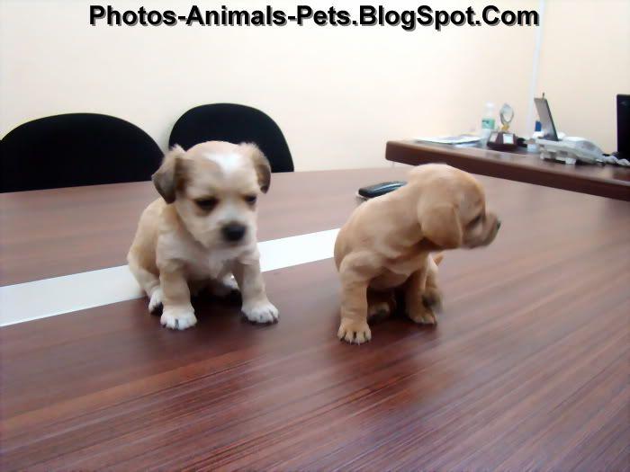 http://2.bp.blogspot.com/-fWdd-W9Pfaw/Th09BJF2hRI/AAAAAAAABqo/PnZbl57I4bA/s1600/cute%2Bpuppies_0003.jpg