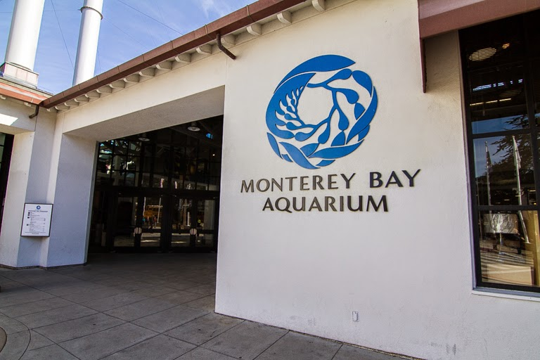 Tales Of The Flowers Monterey Bay Aquarium Part 1