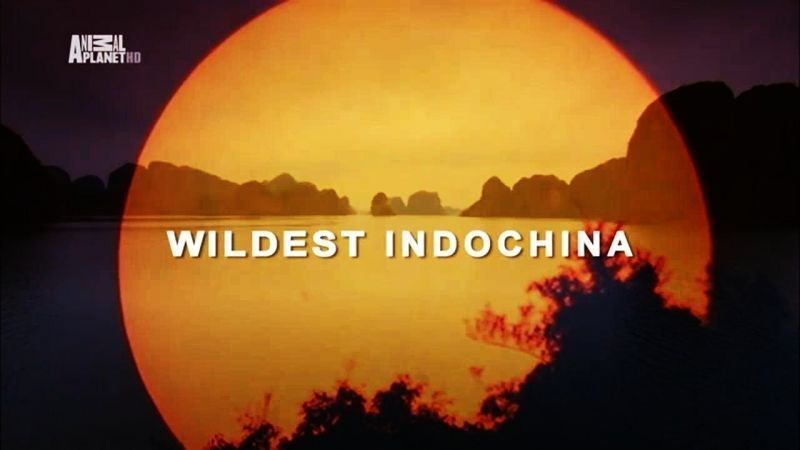 [Thiên nhiên|Tài liệu du lịch] Wildest Indochina 2014 mHD HDTV DD5.1 x264-TRiM ~ Đông Dương Hoang Dã…