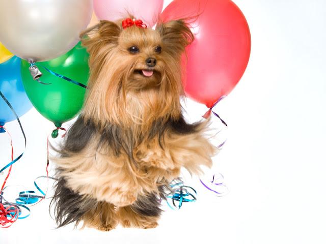 Companion Animal Psychology has passed one million page views!