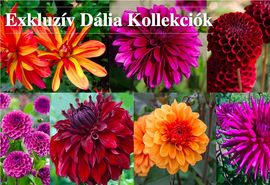 Dekor&Mentha Shop a szép és ízletes kertért