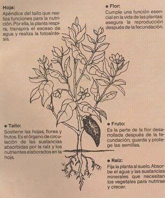 Blog de Trabajo de 3 Grado A y B Trabajo Prctico Las Plantas