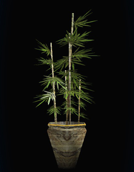 how to keep bamboo alive