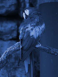 Desaturated Macaw + Blue 416cbc;  Mode Color; Opacity 100%
