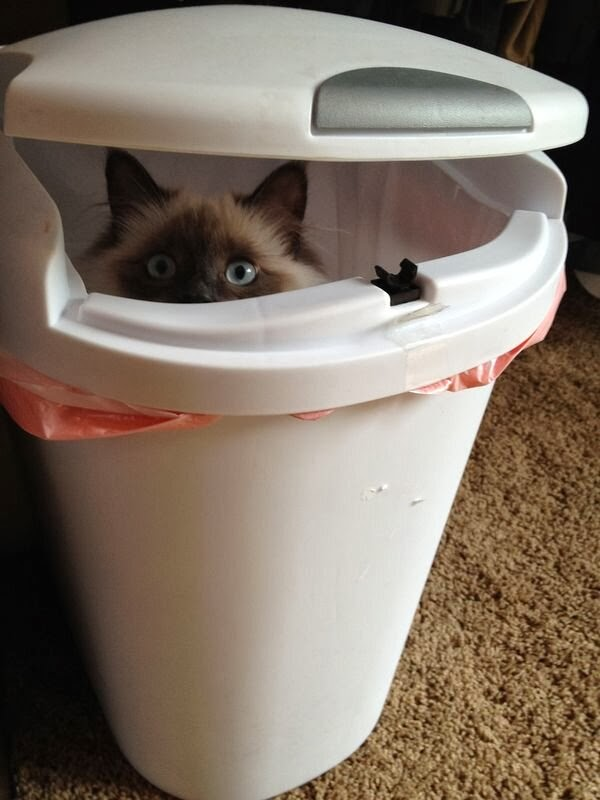 Funny cats - part 79 (35 pics + 10 gifs), cat in garbage bin