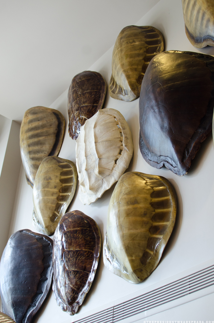 Decorating with Faux Tortoise Shells | Driven by Decor