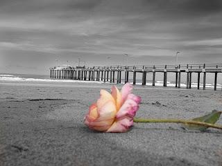 El perdón es el perfume que despide una flor después de ser pisada.