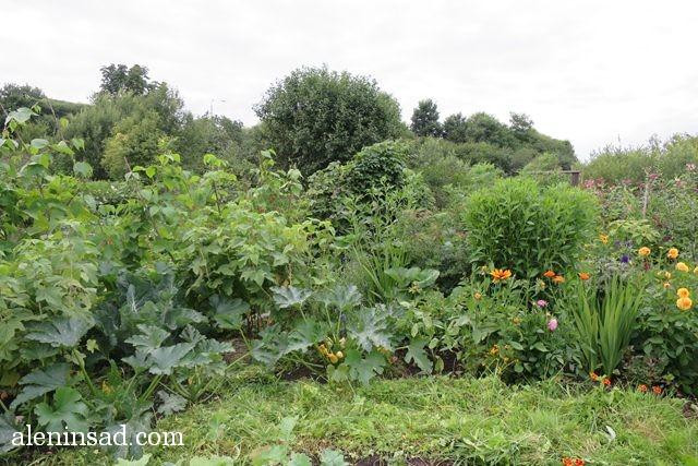 аленин сад, aleninsad, июль в саду, зелень в саду, овощи в июле, травы июля, опора-пирамида, фасоль, теплица,