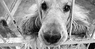 CONTRA LA VENTA DE ANIMALES