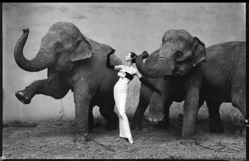 Dovima Elefante | Style Memorial