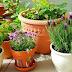 5 Tips Terbaik dalam Memilih Pot Tanaman