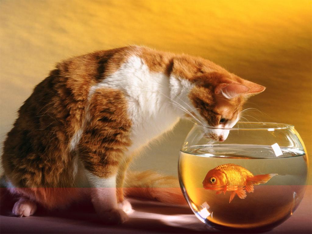 http://2.bp.blogspot.com/-fZ2zZ5xzE98/T2XfbH5IH4I/AAAAAAAAAXo/3pNlp_myYwI/s1600/cat_wallpaper34_1024x768.jpg