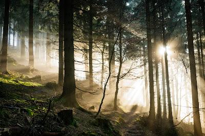 Lichtstralen in het mistige bos van Sauerland