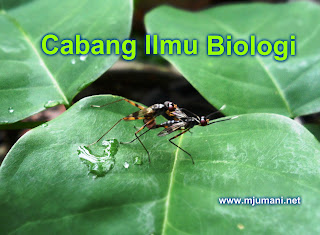 Cabang Biologi dan pengertiannya