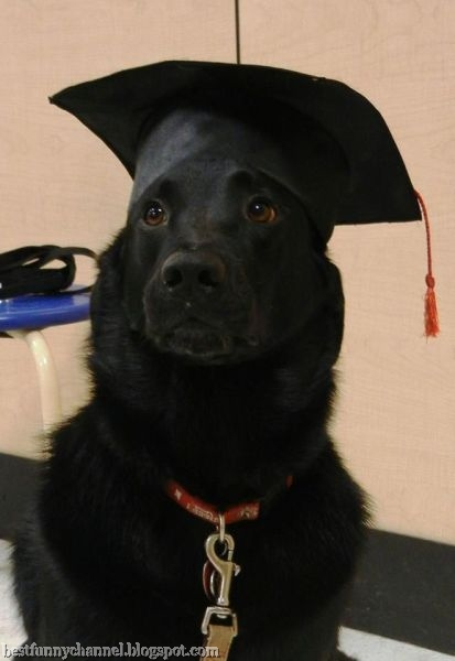 Dog school graduate