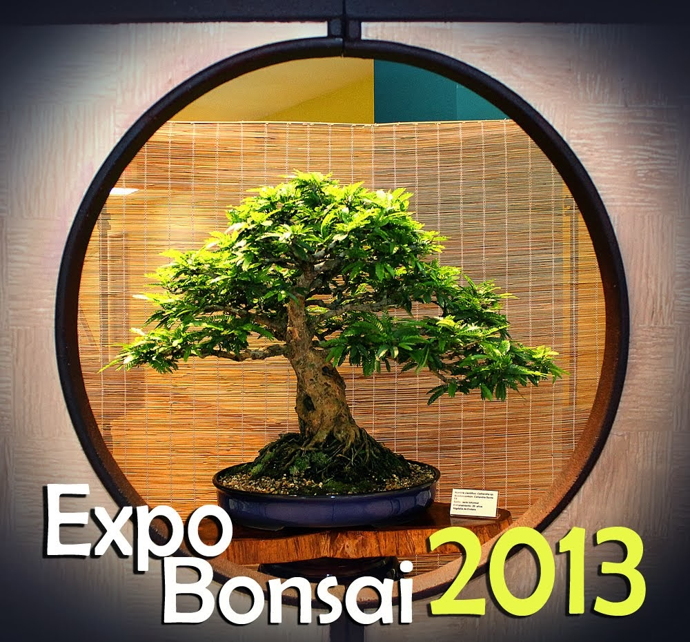 EXPO BONSAI 2013