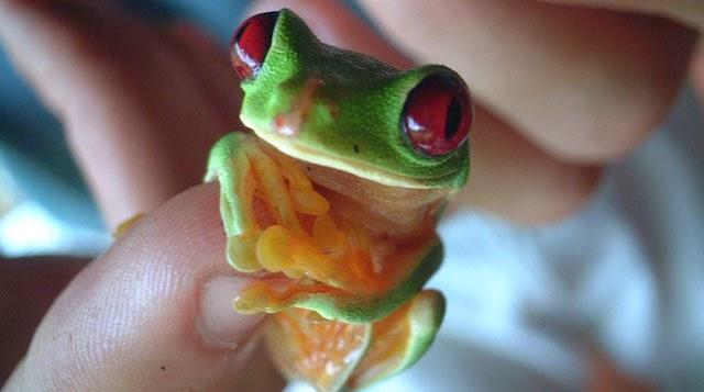 Animales pequeños del tamaño de tu dedo