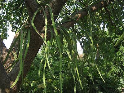 El cuexcomate salida de campo 2011 el fruto milagroso for Viveros del sureste