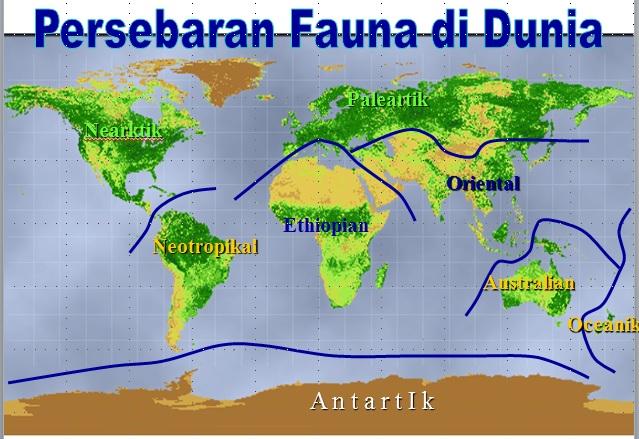 Zona Neotropical ; amerika bagian tengah dan selatan (Amerika latin)