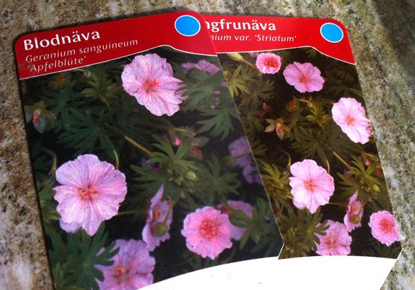 Två växtetiketter med samma bild, men med olika plantnamn.