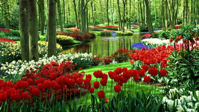 Ảnh đẹp cuộc sống: Bộ hình nền đẹp về cánh đồng hoa Tulip 15