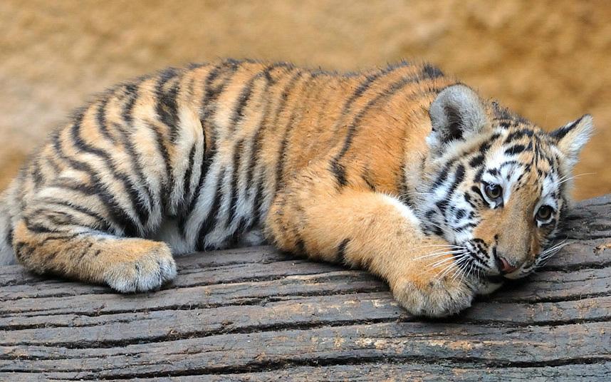 Животные в фотографиях (16 фото)