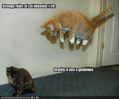 My Top Collection: Funny kitten pics with captions