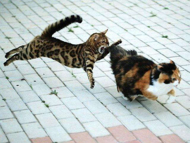 funny animal pics, animal photos, cats fight