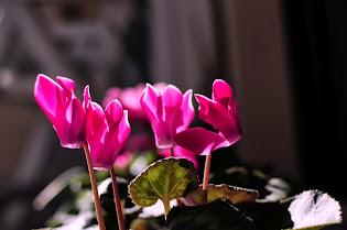 """""""Σαν τα χειμωνιάτικα λουλούδια"""""""