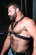 Bull Studs' Hairy Chest