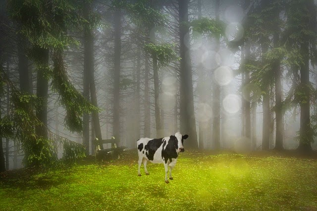 Ghost Cattle