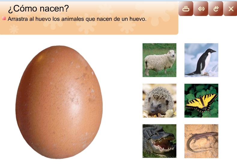 Imagenes de animales que nacen del huevo - Imagui