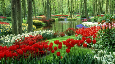 #9 Delightful Flowers Garden Wallpapers