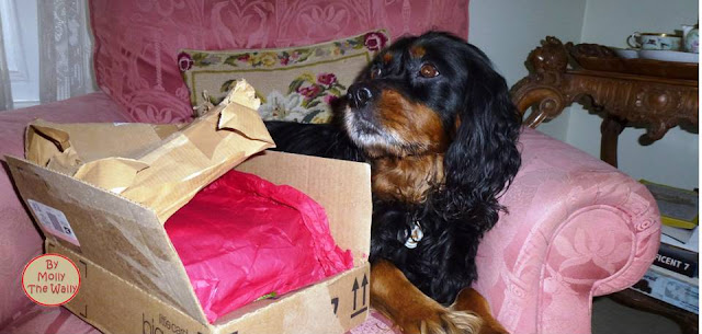 Molly The Wally Has A Package From Freya at Soggibottom.1!
