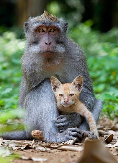 Фото котенка и обезьяны