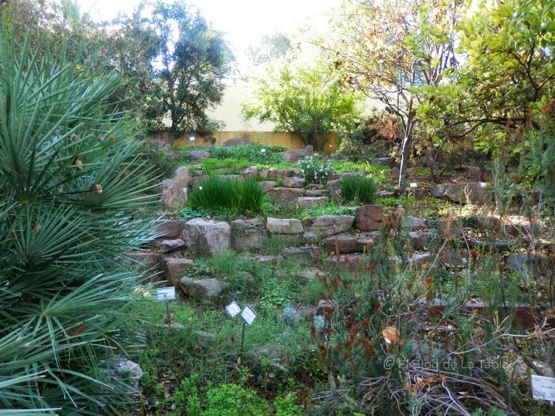 Jardines bot nicos y un paseo por el bot nic de val ncia for Jardin botanico albacete
