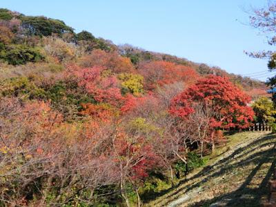 浄明寺緑地の紅葉