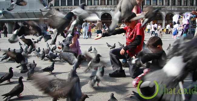 Dilarang memberi makan burung di Venesia, Italia