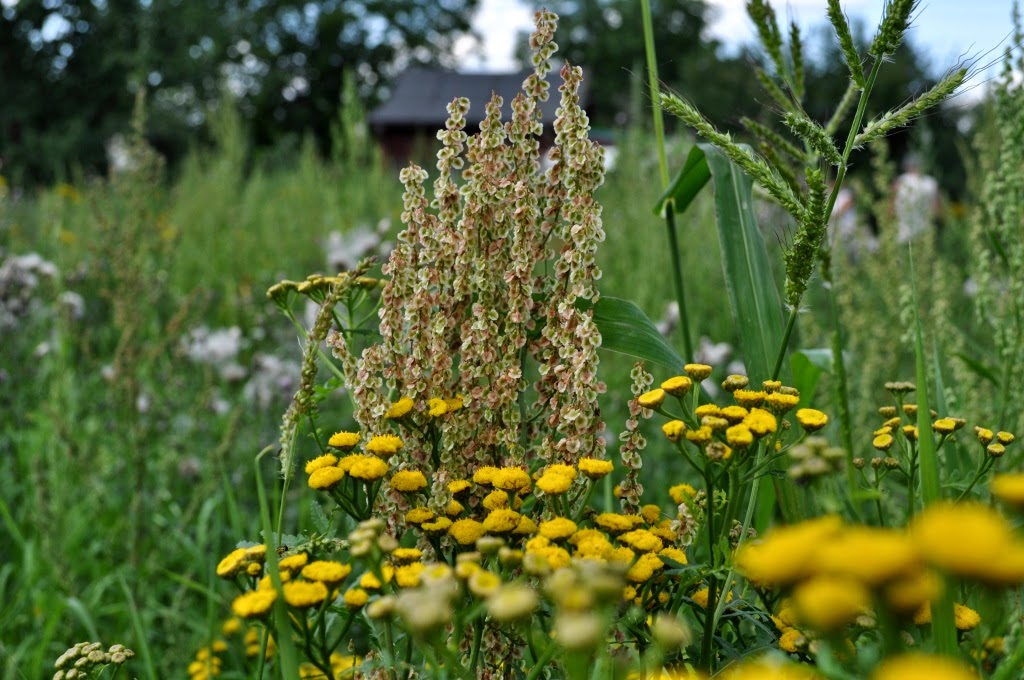ogród dla alergików