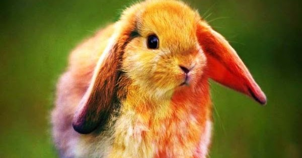 Facebook Updates Easter Photos With Real Bunny 13 Awful Family Fun For You And Good