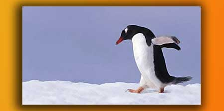 Penguin & SEO